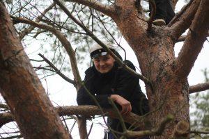 Kibuilupuu